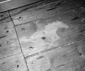 mustang and wooden floor image