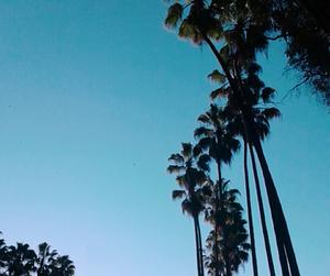 palmeras image