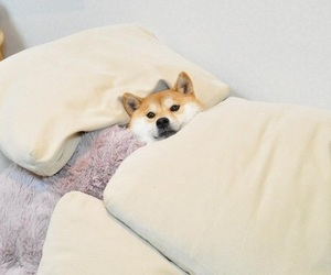 犬 image