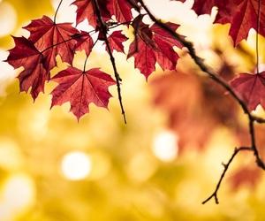 fall, leaves, and orange image