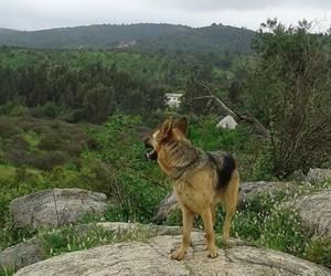 animal, country, and sky image