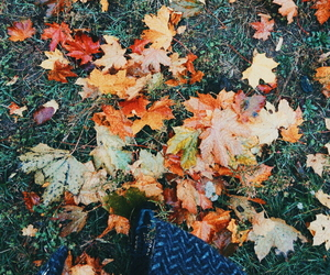 aesthetic, autumn, and colors image
