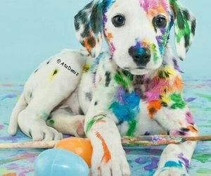 colorful, puppy, and dog image