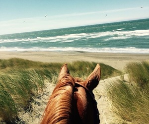 beach, travel, and horse image