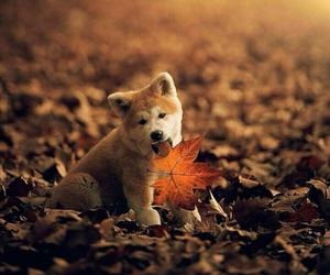 autumn, leaves, and dog image