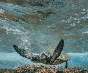 animal, sea, and sea turtle image