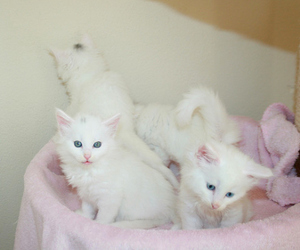 cute, cat, and kittens image