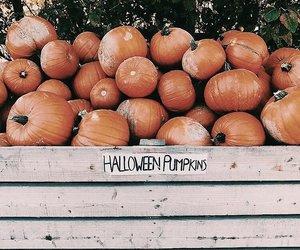 pumpkin, autumn, and Halloween image