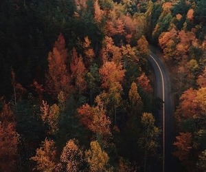 adventure, autumn, and into image