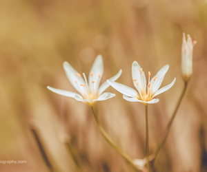 fine art photography, flowers, and nature image