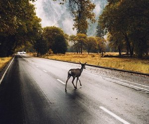 beautiful, nature, and road image