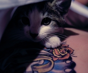 kitty, tattoo, and cute image