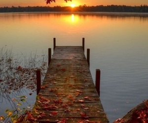 autumn, sunset, and fall image