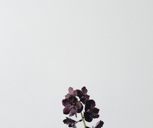 aesthetic, orchids, and white image