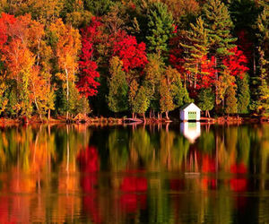 autumn, lake, and leaves image