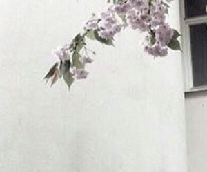 flower, header, and twitter image