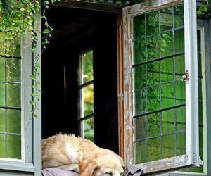 dog, green, and window image