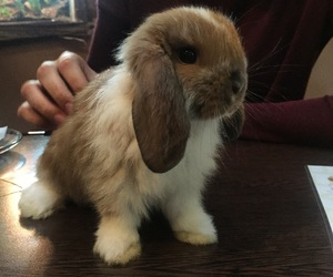 bunny and cute image