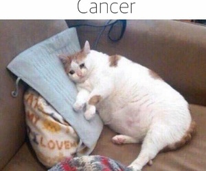 cancer, sad, and cat image