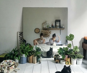 aesthetic, plants, and cat image