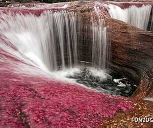 colorful, flowing, and pink image