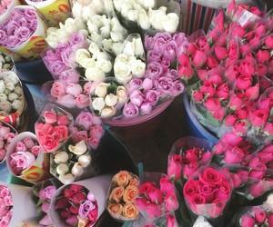 beautiful, pink, and rosa image