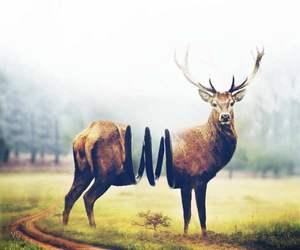 abstract, animal, and art image