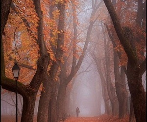 autumn, forest, and november image