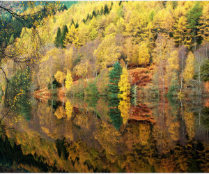 colors, europe, and leaves image