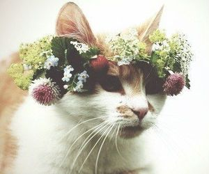 cats, kittens, and flower crowns image