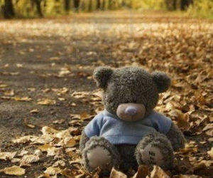 autumn, leaves, and teddy bear image