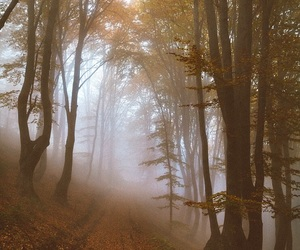autumn, mist, and fall image