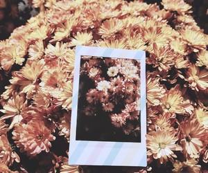 aesthetic, alternative, and autumn image