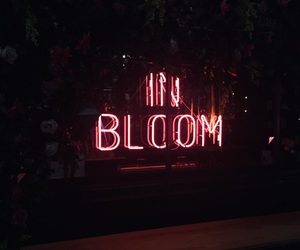 bloom, dior, and feed image