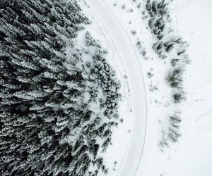 white, winter, and forest image