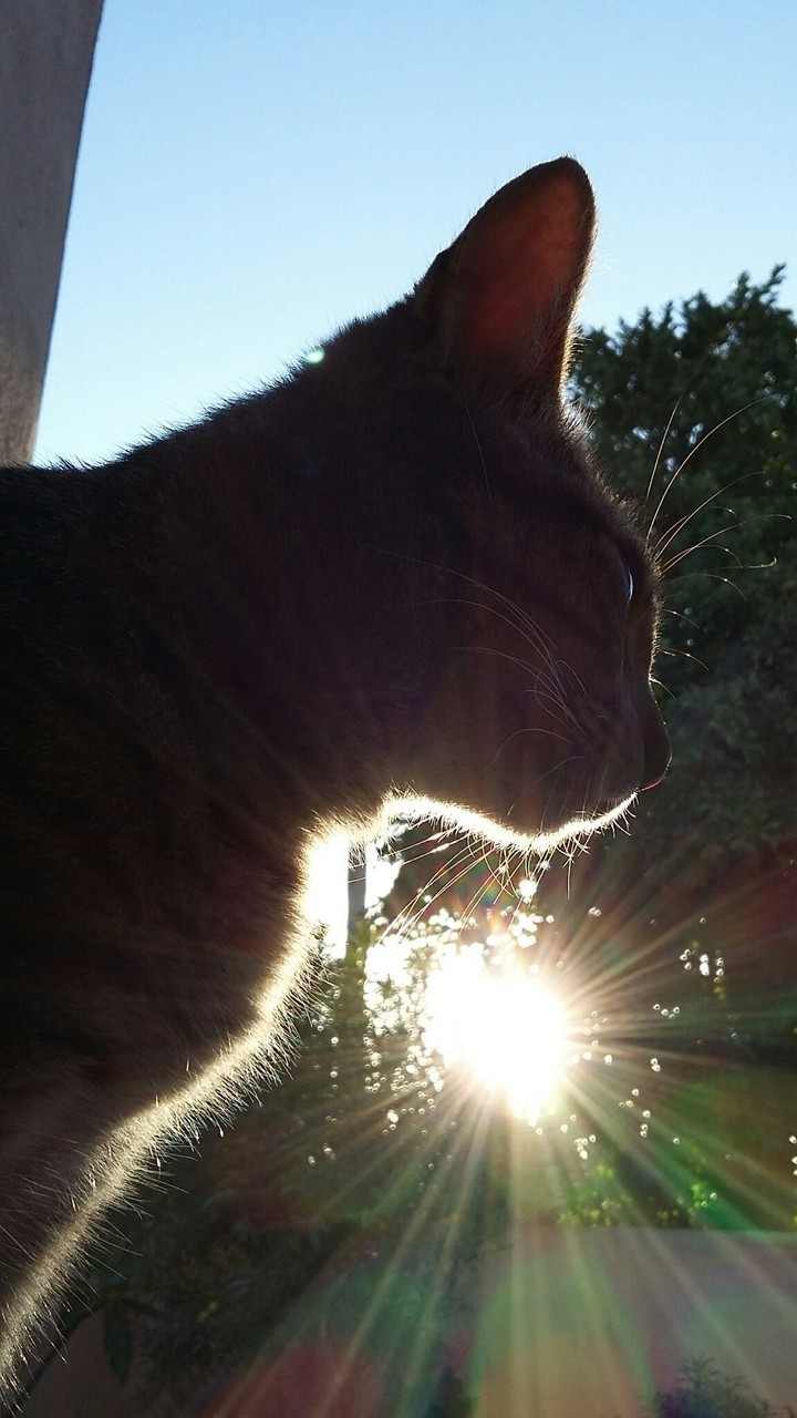 cat and sunset image