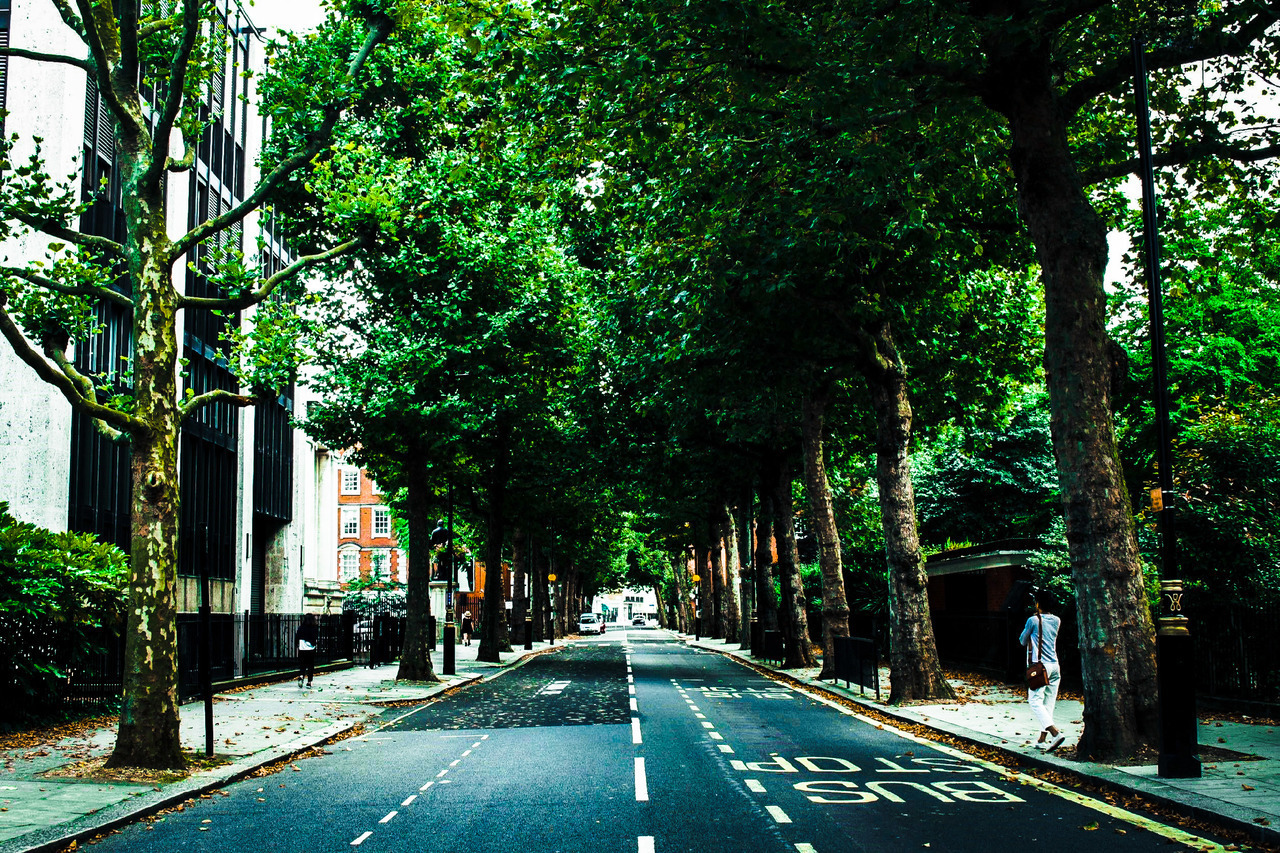 green, london, and nature image
