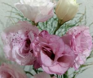 flor, primavera, and flowers image