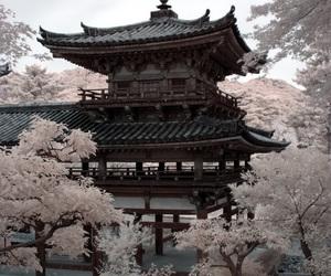 japan, sakura, and pale image