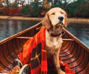 dog, autumn, and cozy image