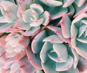 pink, plants, and theme image