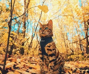 animals, fall, and photography image