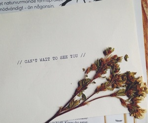 boy, dried flowers, and flowers image