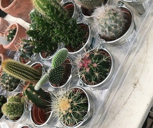 cacti, cactus, and flowers image