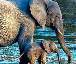 animal, baby animal, and cute image