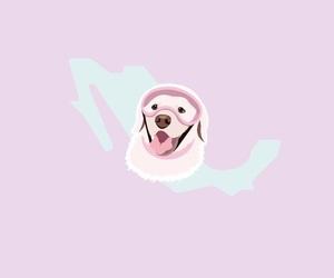 méxico, background, and dog image