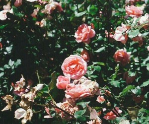 wallpaper, layers, and rose image