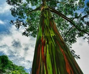 arbol, arcoiris, and naturaleza image