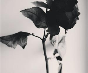 flower, rose, and broken image
