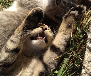 cats, kittens, and animallover image